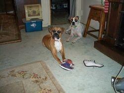 Chloe and Pebbles