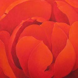 Red Tulip - Squared