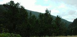 Bristlecone Natural Area