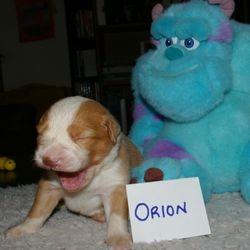 Orion Big Yawn