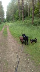 At the forest with house mate Holly Belle and Buddy, Herbie and Heston