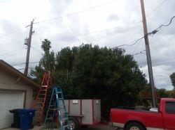trimming the bush