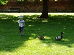 Chasing ducks!