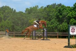 Over the skinny, 3' Jumper Sunday Funday Jumper Show