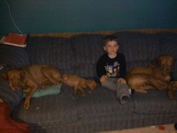Abby, puppy, and Max with Kellen