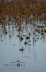 Marsh #2