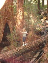 Dipsea Trail Hike