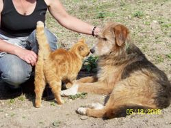 Now - Barney with Diane and Sky the cat