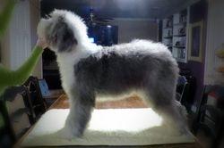 Gypsy 8 months