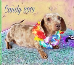Candy 2019