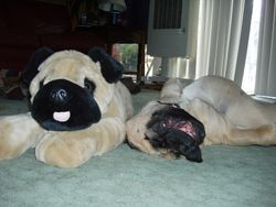 Chuckwagon and friend