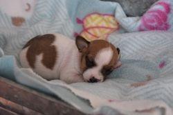 Baby Maisie