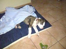 Blu FKA Sleepy