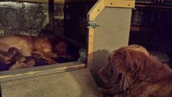 Auntie Echo fascinated with puppies