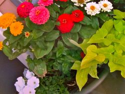 Plant Arrengement