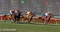 Gamely Stakes (Gr. 1)