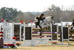Pepperjack- Prelim @ Full Gallop January HT
