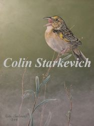 "Grasshopper Sparrow (16 by 12"" acrylic on masonite) In Private Collection"