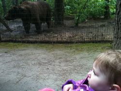 Coco with Grizzly Bear