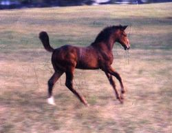 Nabella as a weanling