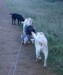 5 of us in a line