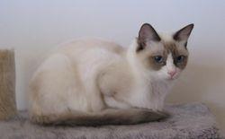 Princess at 15 months
