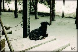 Pierwsza zima