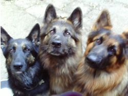 Willow, Assie and Merlin