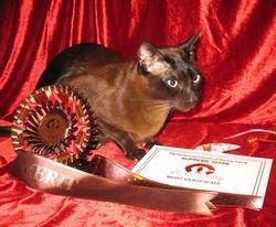 Supreme Cat Show 2013