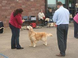 Winner of Veteran Dog