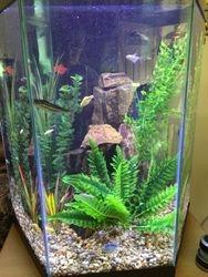 35 gallon Hexagon Fresh-water