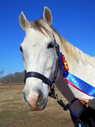 Jack modeling his Champion ribbon