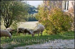 Near Assisi,Italy