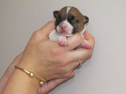 5 Days old