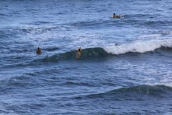 Surfers looking for the perfect wave