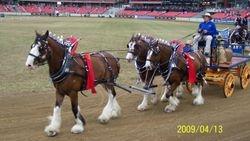 sydney royal 09