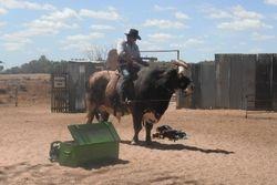 Riding a Big Bull