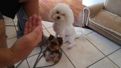 Papi and Lulu