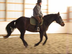 Canter on loose rein