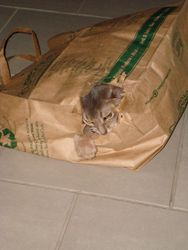 Oliver likes all bags....