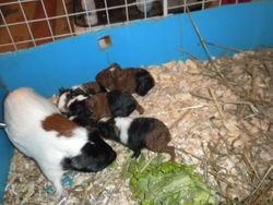 Puzzle and her 5 babies