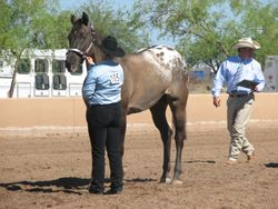 Tabitha Parrish showing Willow Tango Bandit