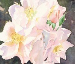 Burst of Roses
