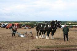 Horses & Plough