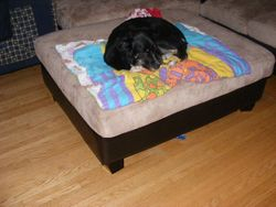 Bailey relaxing