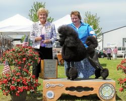 Piper earning her AKC CH title