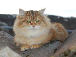 Dinah Året`s katt i Sàsk 2011