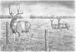 "Autumn in the Parkland (30 by 44"" pencil drawing)"