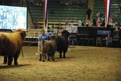 Cow/calf class