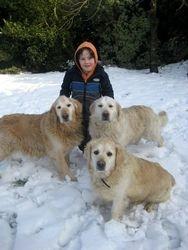 Luke with Nana's dogs